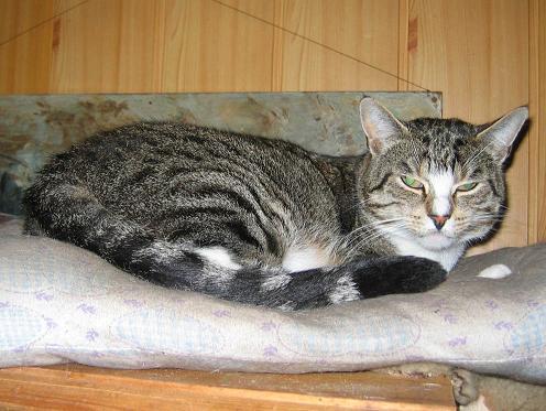 czarus kot kotek kicius kocur kocisko kotka koteczka do adopcji warszawa