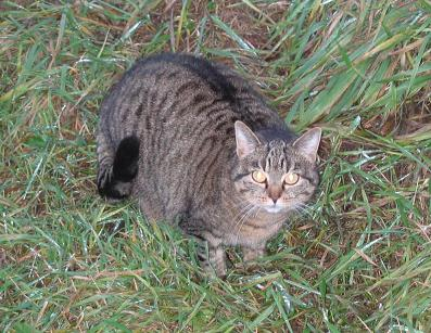 mateczka kot kotek kicius kocur kocisko kotka koteczka do adopcji warszawa